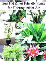 extraordinary cat safe indoor plants cat safe indoor nts pet friendly how to improve air quality extraordinary cat safe indoor plants