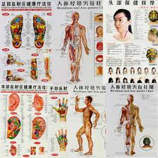 7pcs Set English Hand Foot Ear Body Meridian Points Of Human Wall Chart Female Male Acupuncture Massage Point Map Flipchart Aliexpress