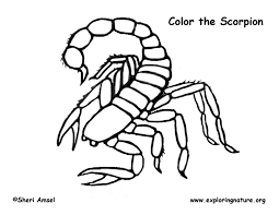 Small Picture Scorpion Coloring Page