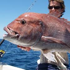 Lanzarote Fish Chart Sea Fishing In Lanzarote Find And Book Your Charter