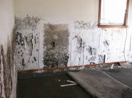 legal aspects of mold contamination