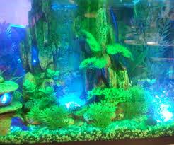 interactive aquarium led lighting steps