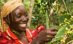 ... have announced plans to achieve Fairtrade certification for Cadbury Dairy Milk, the nation's top selling chocolate bar, by end of Summer 2009. - fairtrade20090316