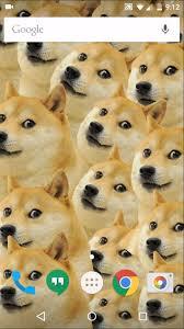 doge wallpaper android. Brilliant Doge Doge Wallpaper  In Wallpaper Android A