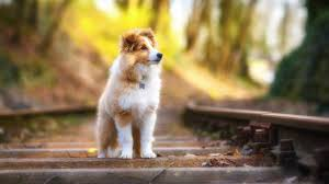 hd pictures of cute animals. Beautiful Pictures Cute Animal Wallpapers 1 For Hd Pictures Of Animals E