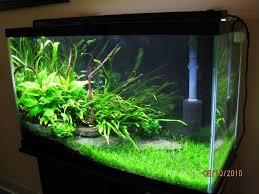 29 Gallon Tank Light 29 Gal Low Tech Tropical Fish Tanks Freshwater Aquarium