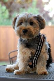 chewbacca dog costume images reverse search