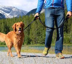 dog leash img
