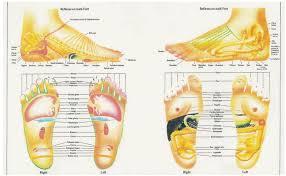 Foot Organ Chart Free Foot Reflexology Charts 35 Free Printables Word Pdf