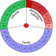 Image result for photo of the safe period chart