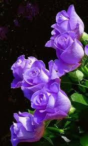 beautiful purple flowers purple was my grandma eloise s favorite color i always