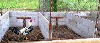 Ukuran kandang umbaran/tenggaran ayam bangkok#081291544784. Cara Membuat Kandang Ayam Bangkok Umbaran