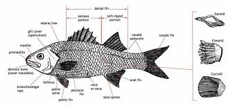 figure   diagrams of fish production and water requirementsa diagram of fish anatomy  and a description of a few sensory functions in fish