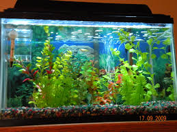 Fish Tank Lights Cheap Led Aquarium Lighting 13 Steps Instructables