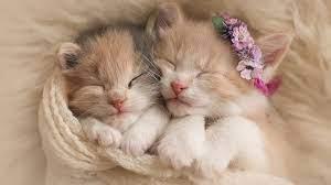 Kittens Cute Cat Wallpaper 4K #4.3346