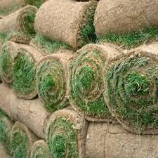 carpet grass. selection grass carpet rolls