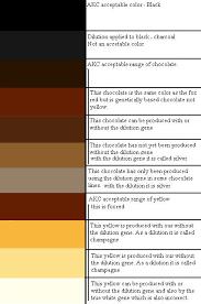 Labrador Color Chart Labrador Colors