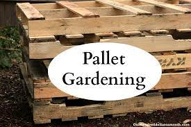 pallet gardening 101 creating a pallet