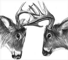 24 Free Deer Drawings Designs Free Premium Templates