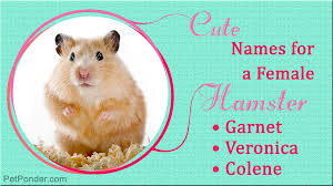 Names for girl hamsters