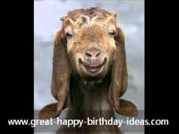 Happy birthday messages using symbols ~ Happy birthday messages using symbols ~ Happy birthday card from an old goat free funny birthday wishes