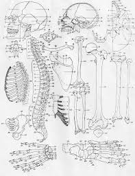 Small Picture Anatomy And Physiology Coloring Workbook Skeletal System KeyAnd