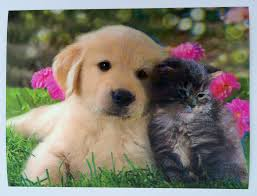puppy and kitten.  Puppy DC16 Puppy And Kitten 1 3D Picture Inside And P