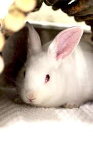 petsmart animals bunny. Exellent Petsmart PetSmart Charities Of Canada Bunny Adoptions Inside Petsmart Animals Bunny