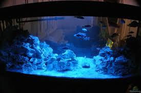 View Images Optimale Beleuchtung Malawi Aquarium Malawi Aquarium Kaufen Teil