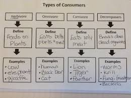 Producer And Consumer Venn Diagram Fifth Grade Lesson Types Of Consumers Betterlesson