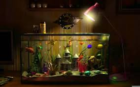 4 Fish Tank Hd Wallpapers Background Images Wallpaper Abyss