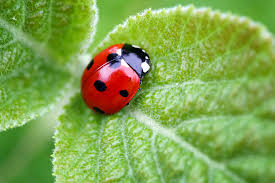 our gardens are teeming with insects mites spiders and other creatures to a new gardener every bug is a likely suspect
