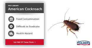 Roach Size Chart American Cockroach Types Facts How To Identify