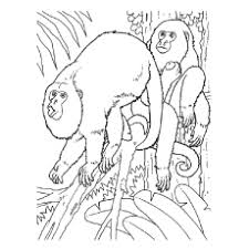Small Picture Top 25 Free Printable Monkey Coloring Pages For Kids