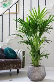 Pflanzen Für Schlafzimmer Wenig Licht Wohnen In 2019