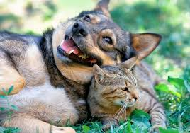 cats and dogs playing. Contemporary And Dog And Cat Teeth The Basics In Cats And Dogs Playing D