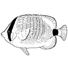 Small Picture Top 10 Free Printable Tropical Fish Coloring Pages Online