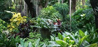 tropical garden design for colder