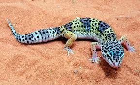 Specii de reptile
