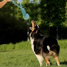 2017 rexway extra sy dog rope toys for aggressive chewers bonus free collapsible water bowl and