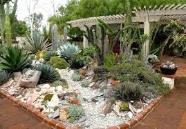 indoor cactus garden outdoor garden design ideas mini indoor cactus cactus display ideas indoor cactus garden indoor cactus garden