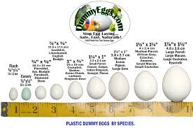 Cockatiel Chart Dummyeggs Com Dummy Eggs Help Stop Egg Laying In Pet Birds