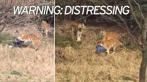 Tourist mauled to death by tigers in front of wife and child \u0027had ...
