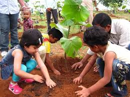 tips to promote a tree plantation drive for tree plantation