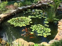 16 Photos Gallery of: Easy Koi Fish Pond Ideas