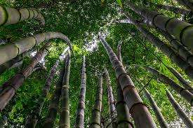 """Résultat de recherche d'images pour """"importance de la nature"""""""