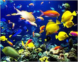 Resultat d'imatges de peixos