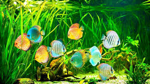 Image result for Take care of an aquarium