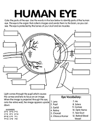 Free Anatomy Coloring Pages Homeschool Eye Anatomy Parts Of The