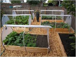 Small Picture Backyards Appealing Small Vegetable Garden Ideas Uk Basic